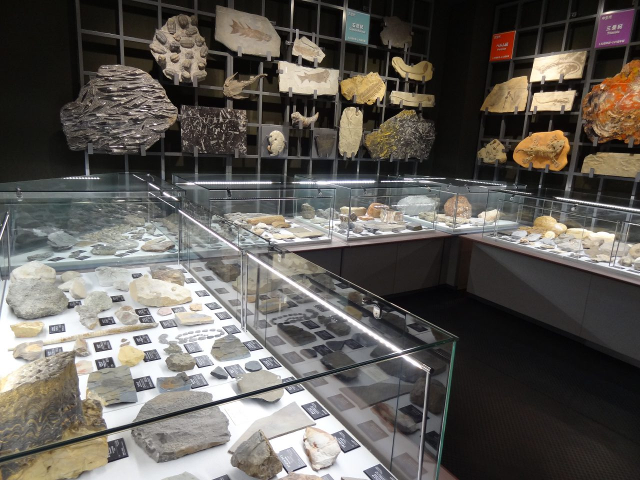 Area's Largest Geological Collection