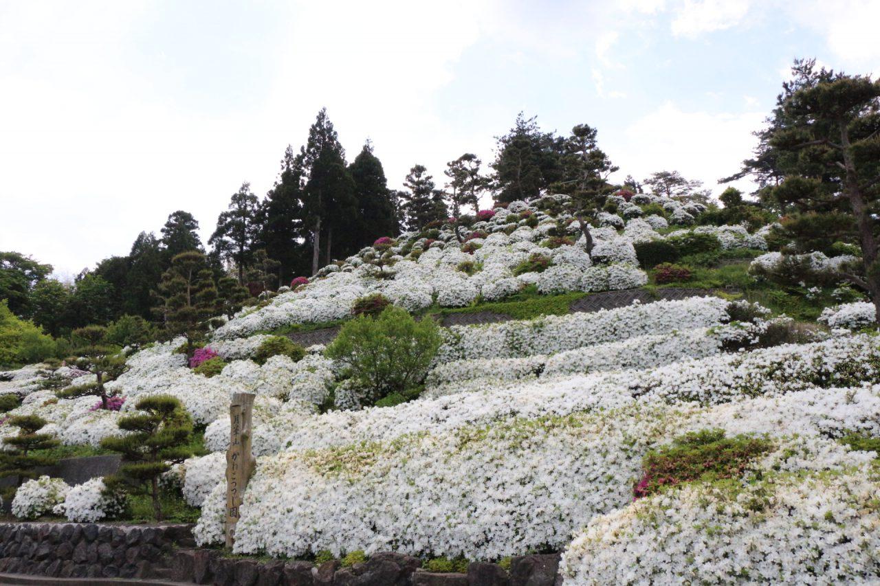 Kaneko Azalea Garden